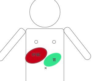肝臓の位置